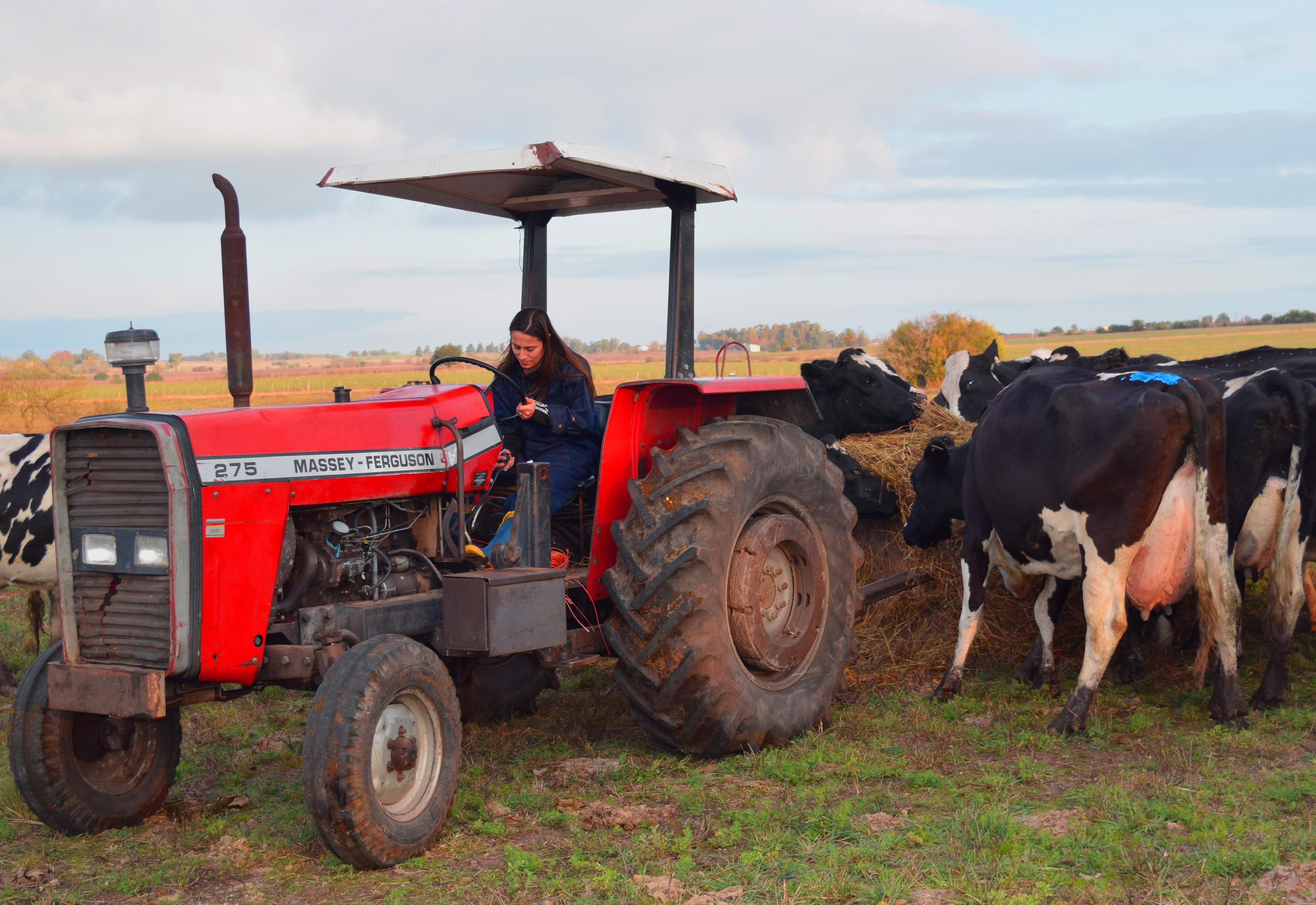 Estudiar y trabajar: una realidad para la carrera en producción lechera